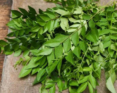 How many curry leaves one can eat for a day