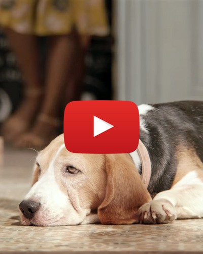 #Aww: This Adorable Dog's Reaction Will Make Your Day