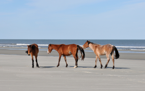 10 underrated beaches - cumberland island