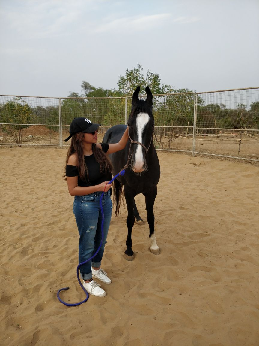 5 natural horsemanship