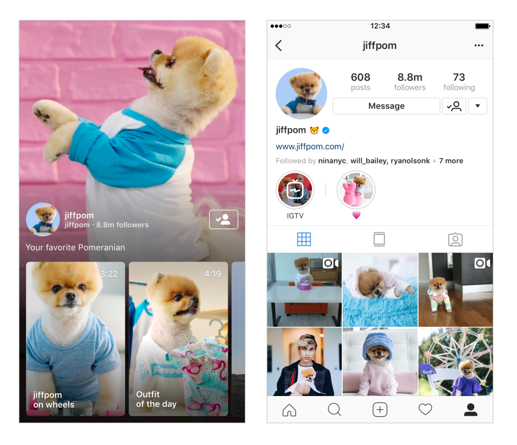 3. Cute dog on instagram