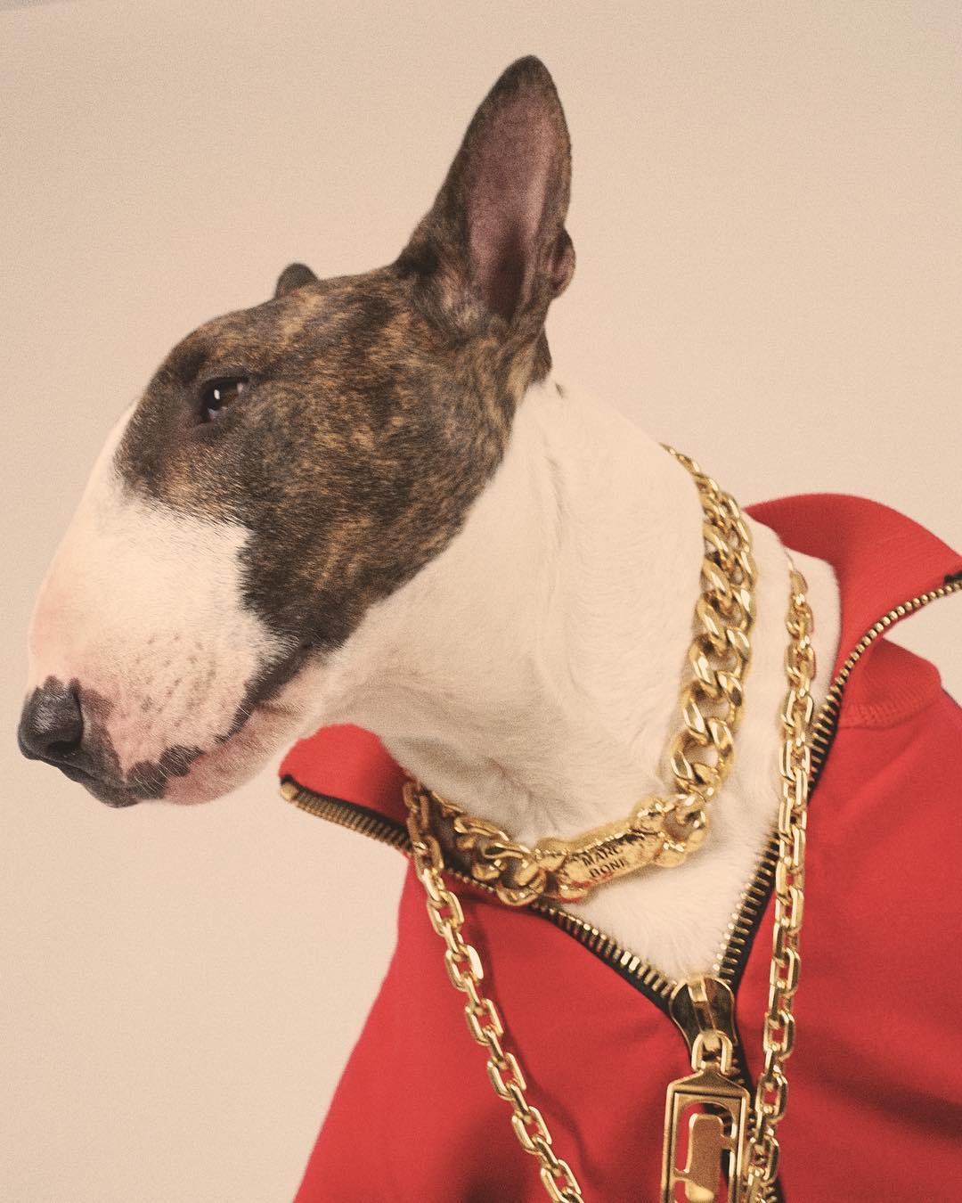 11  nevillejacobs fashionable dogs on insta