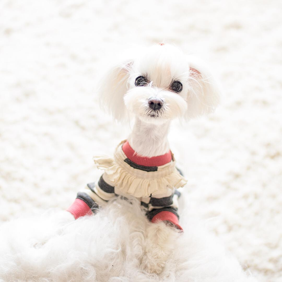 16  eloisecloset fashionable dogs on insta