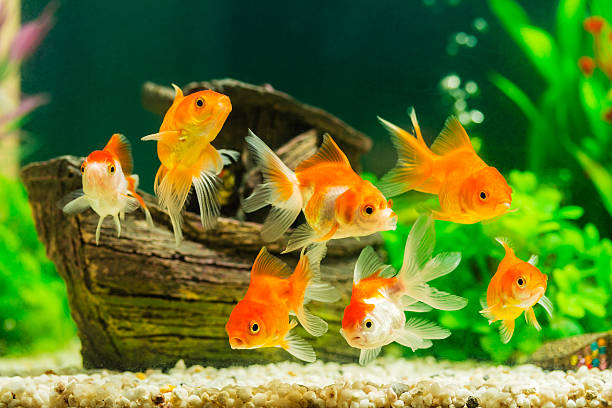 Tips-to-keep-fish-happy-and-healthy-inside-the-Aquarium