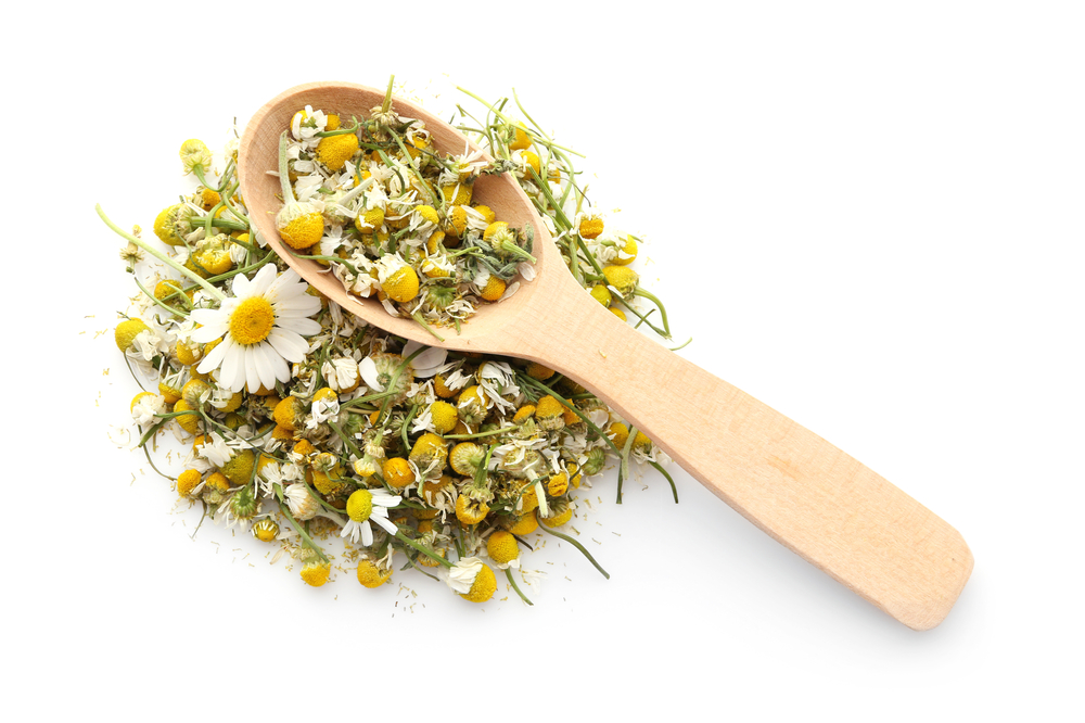 All You Need To Know About Chamomile Tea - Chamomile tea flower