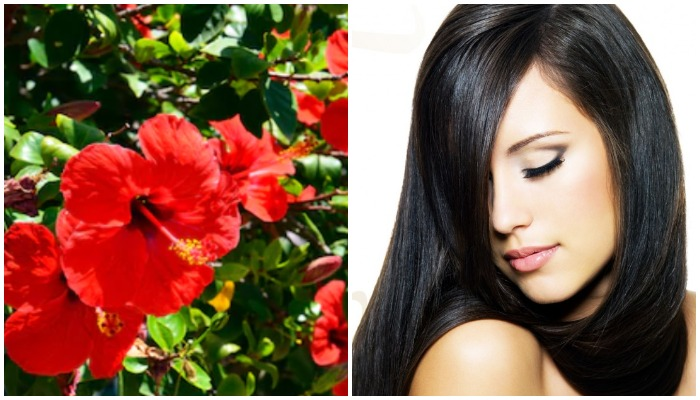 hibiscus-flower-benefits-for-hair-in-hindi