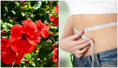 hibiscus-flower-benefits-for-weight-loss-in-marathi