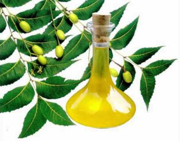 Neem for use at home
