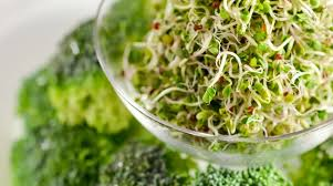 nutritional benefits of sprouts