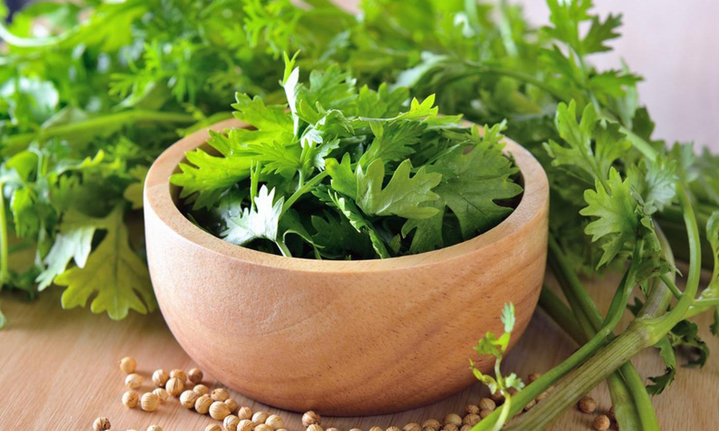 Dhaniya is beneficial for kidney