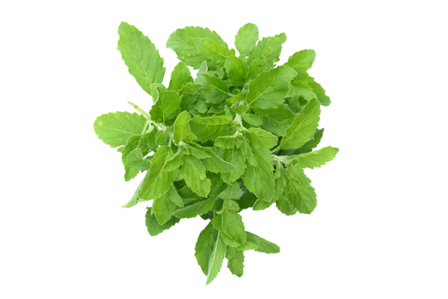 6-Benefits And Side Effects Of Basil Leaves  basil-leaves