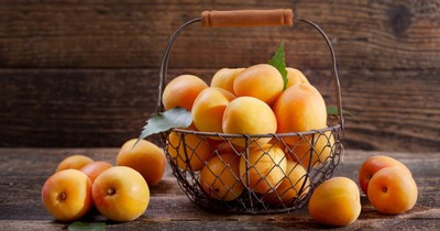 %E0%A4%9C%E0%A4%B0%E0%A5%8D%E0%A4%A6%E0%A4%BE%E0%A4%B3%E0%A5%82 - Benefits Of Apricot In Marathi