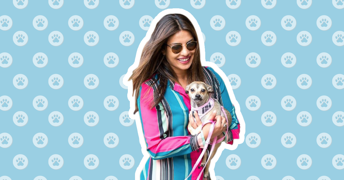 These Celebrity Pets Are More Popular Than You On Instagram!