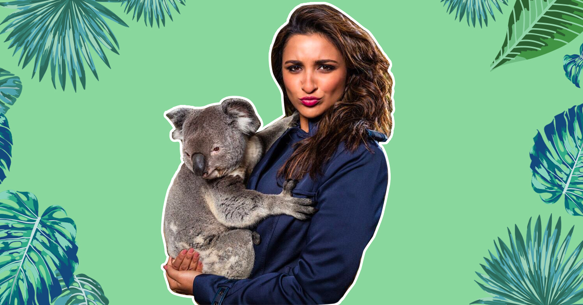 Parineeti Posted A Picture With A Koala & The Comments Were INSANE!