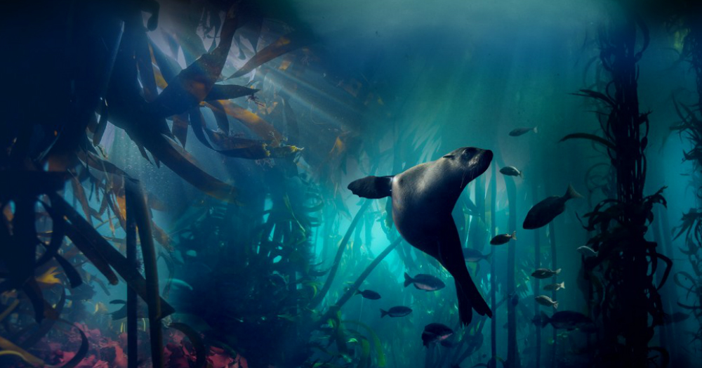 #MustWatch: Blue Planet II Takes You On An Underwater Journey That'll Leave You Transfixed