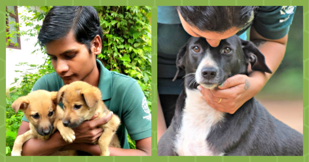 #UnsungHeroes: Volunteers Rescue Animals Trapped In The Kerala Floods