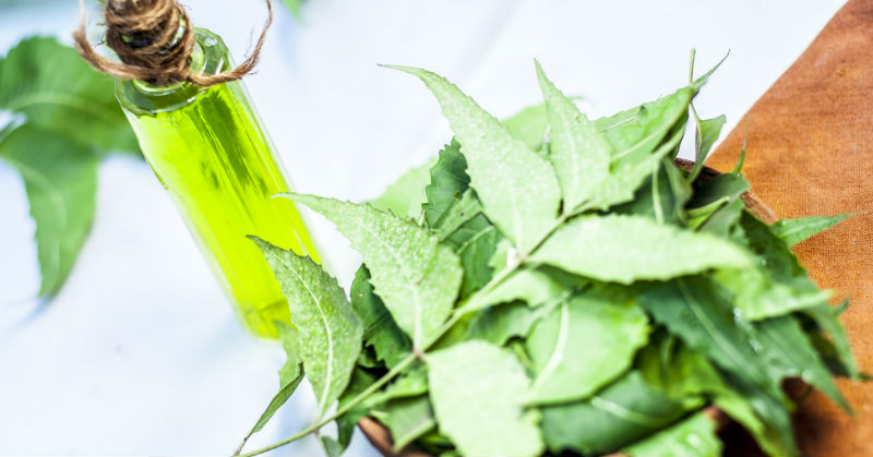 Neem Oil: The Benefits And Everything Else You Need To Know
