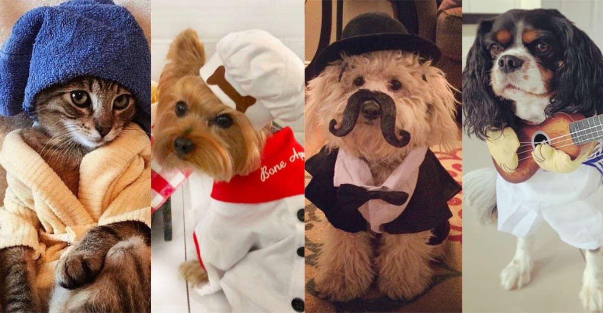 The Cutest Pets Of Instagram That Will Make You Want To Adopt One RIGHT NOW!