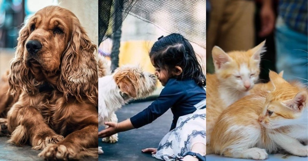 9 Pet Friendly Cafés & Restaurants In Bangalore To Visit With Your Furry Little Friends