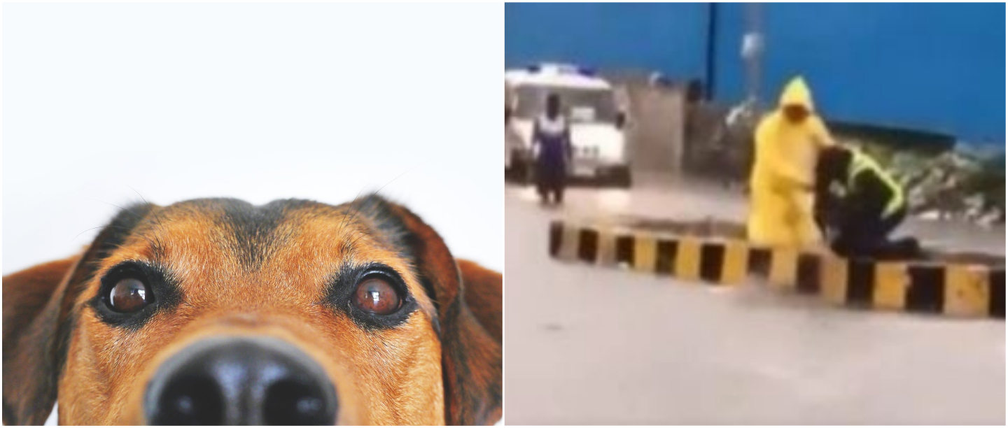 VIDEO: It's A Monsoon Miracle! Mumbai Cop Saves Dog From Drowning During Heavy Rain