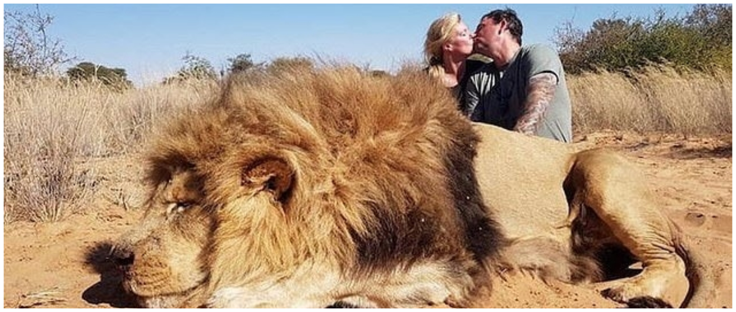 Twitter Is Enraged After A Couple Posed Next To A Dead Lion