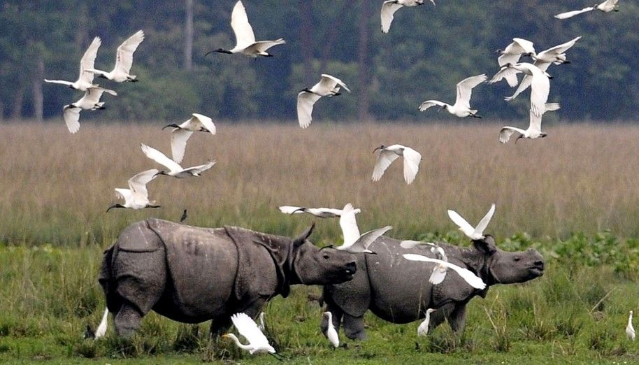 Image Courtesy: Kaziranga National Park