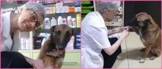 Twitter Is In Love With This Injured Dog That Entered A Pharmacy For Help & So Are We!