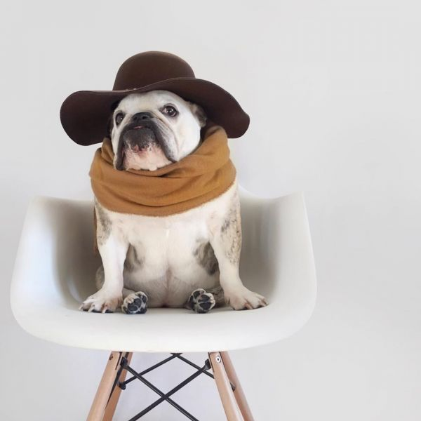 15  maya on the move fashionable dogs on insta