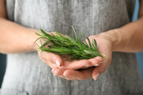 woman-holding-rosemary-plant