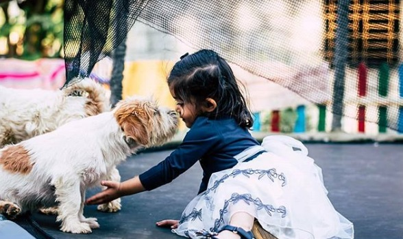 4-pet-friendly-resturants-in-bangalore