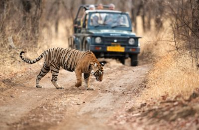 18-weekend-getaways-near-delhi-Sariska