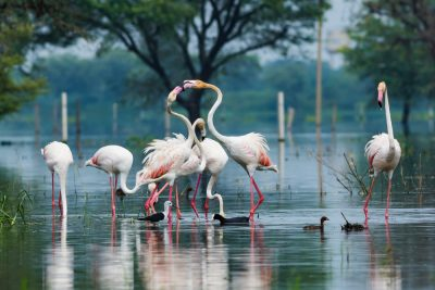 19-weekend-getaways-near-delhi-Bharatpur