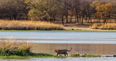28-weekend-getaways-near-delhi-Ranthambore