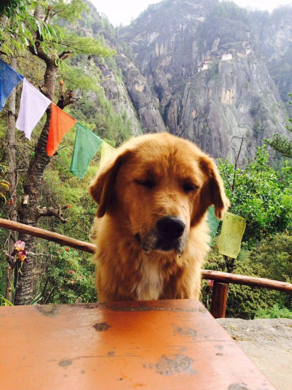 13. trip to bhutan - company tiger's nest