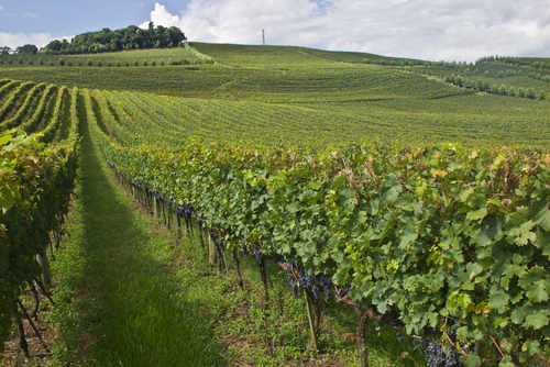 1 best vineyards - bento goncalves