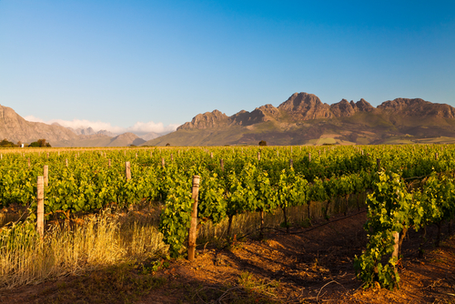 5 best vineyards - stellenbosch south africa
