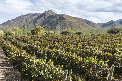 6 best vineyards - calchaqui valley