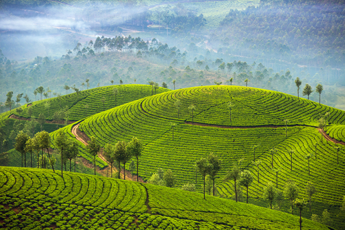 7 indian holiday destinations - munnar kerala