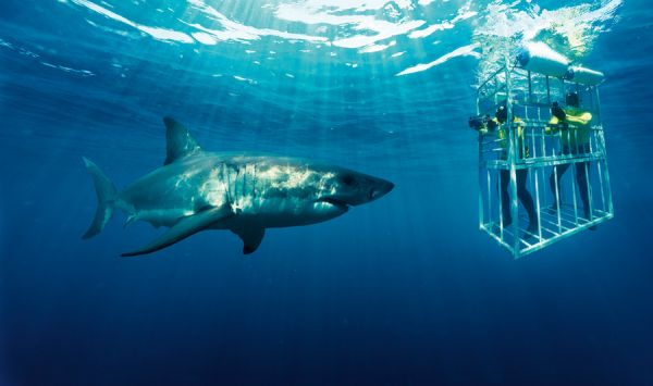 Adventure Western Cape Shark Cage Diving