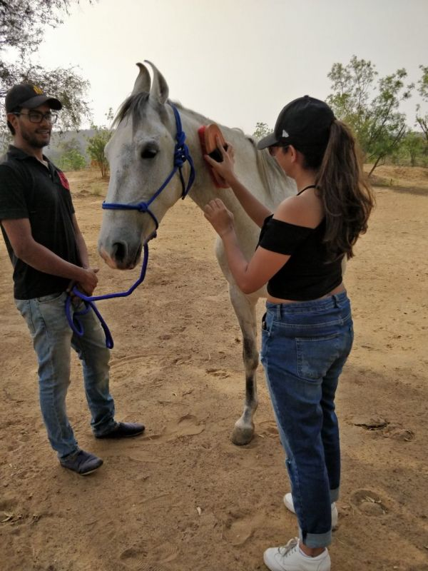 2 natural horsemanship