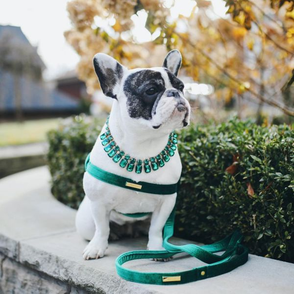 12  lifeofvi fashionable dogs on insta