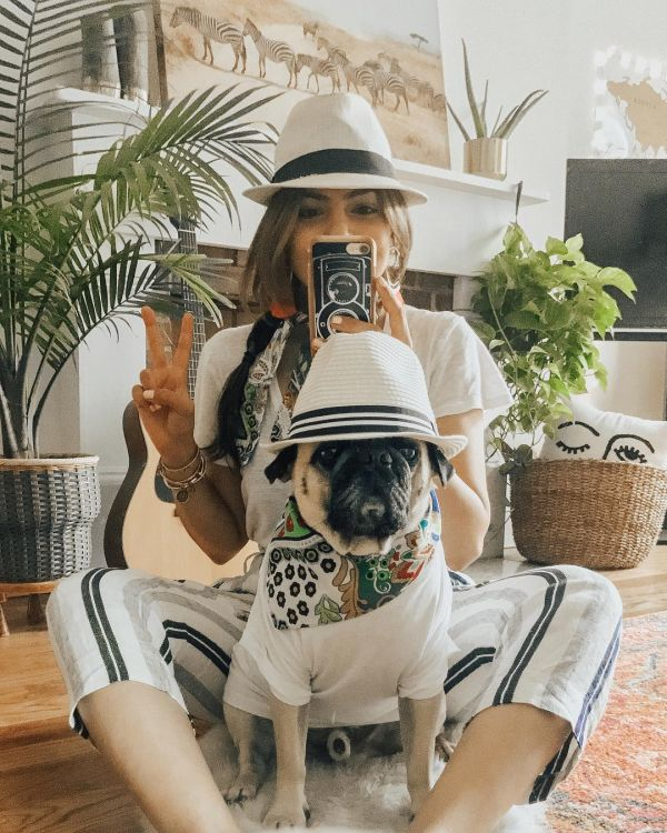 13  honeyidressedthepug fashionable dogs on insta