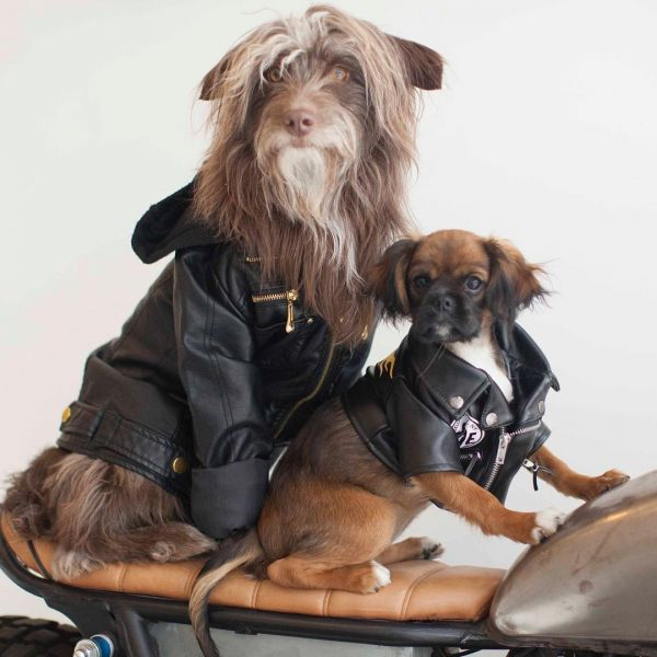 17  rosenbergthedog fashionable dogs on insta