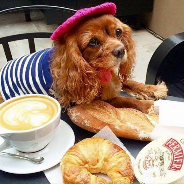 6  toastmeetsworld fashionable dogs on insta