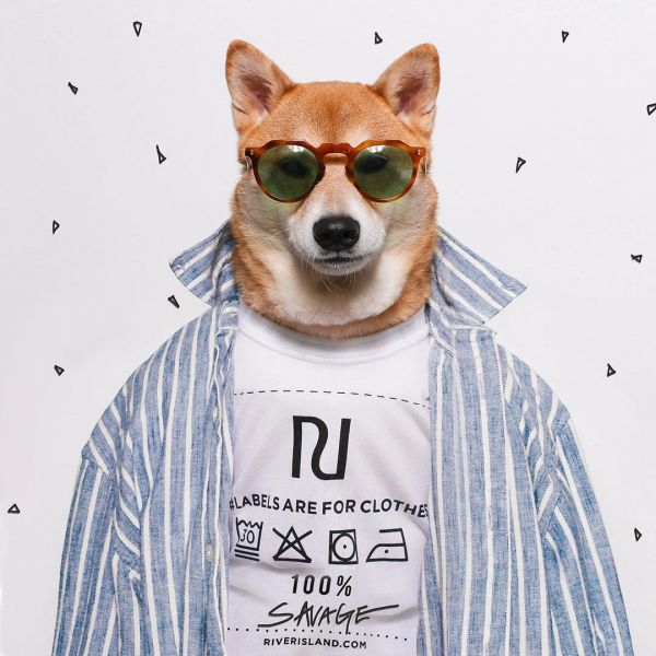 7  mensweardog fashionable dogs on insta