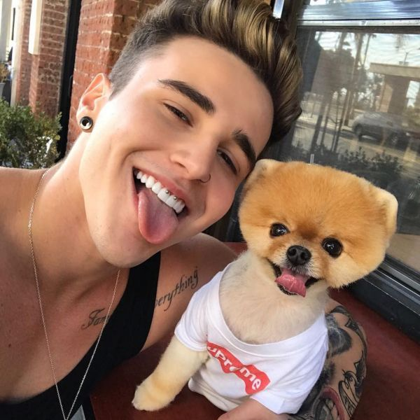 8  jiffpom fashionable dogs on insta