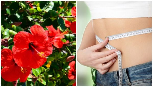 hibiscus-flower-benefits-for-weight-loss-in-hindi