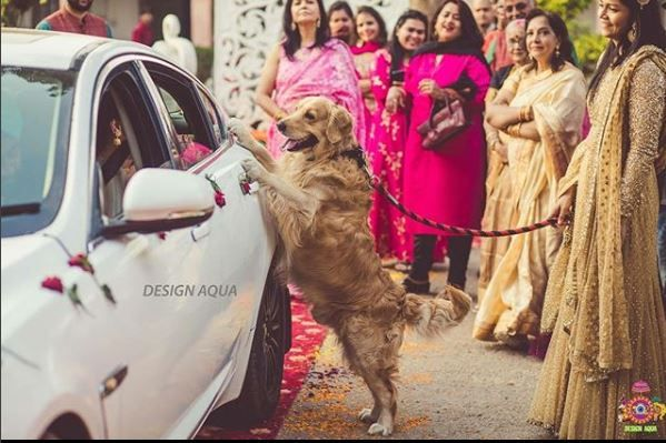 best-shaadi-moments-2018-dog