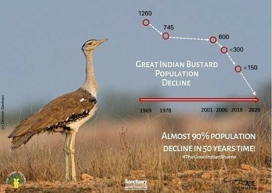 2-great-indian-bustard-conservation-chart-of-decline