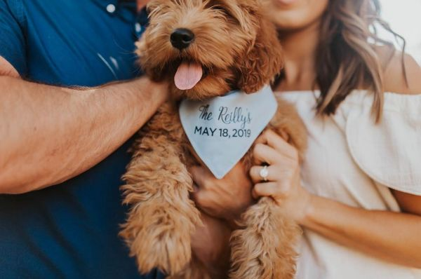 brides-flaunting-engagement-rings-dogs